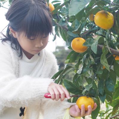 フルーツ収穫体験
